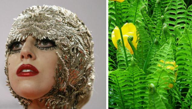 imagen Científicos rinden honor a Lady Gaga con helecho hallado en Costa Rica