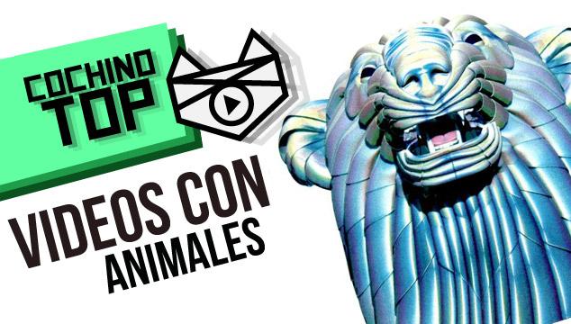 imagen Cochino Top: Videos con Animales