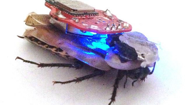 imagen Con esta aplicación podrás controlar los movimientos de una cucaracha (VIDEO)