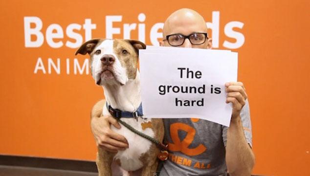 imagen Moby presenta 'el mejor videoclip de la historia', acompañado de muchos perros