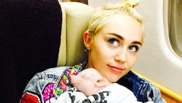 La nueva mascota de Miley Cyrus es… un COCHINO (FOTOS)