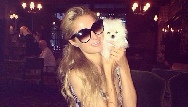 imagen El nuevo perrito de Paris Hilton es tan cuchi como caro (FOTOS + VIDEO + AWWW + $$$)